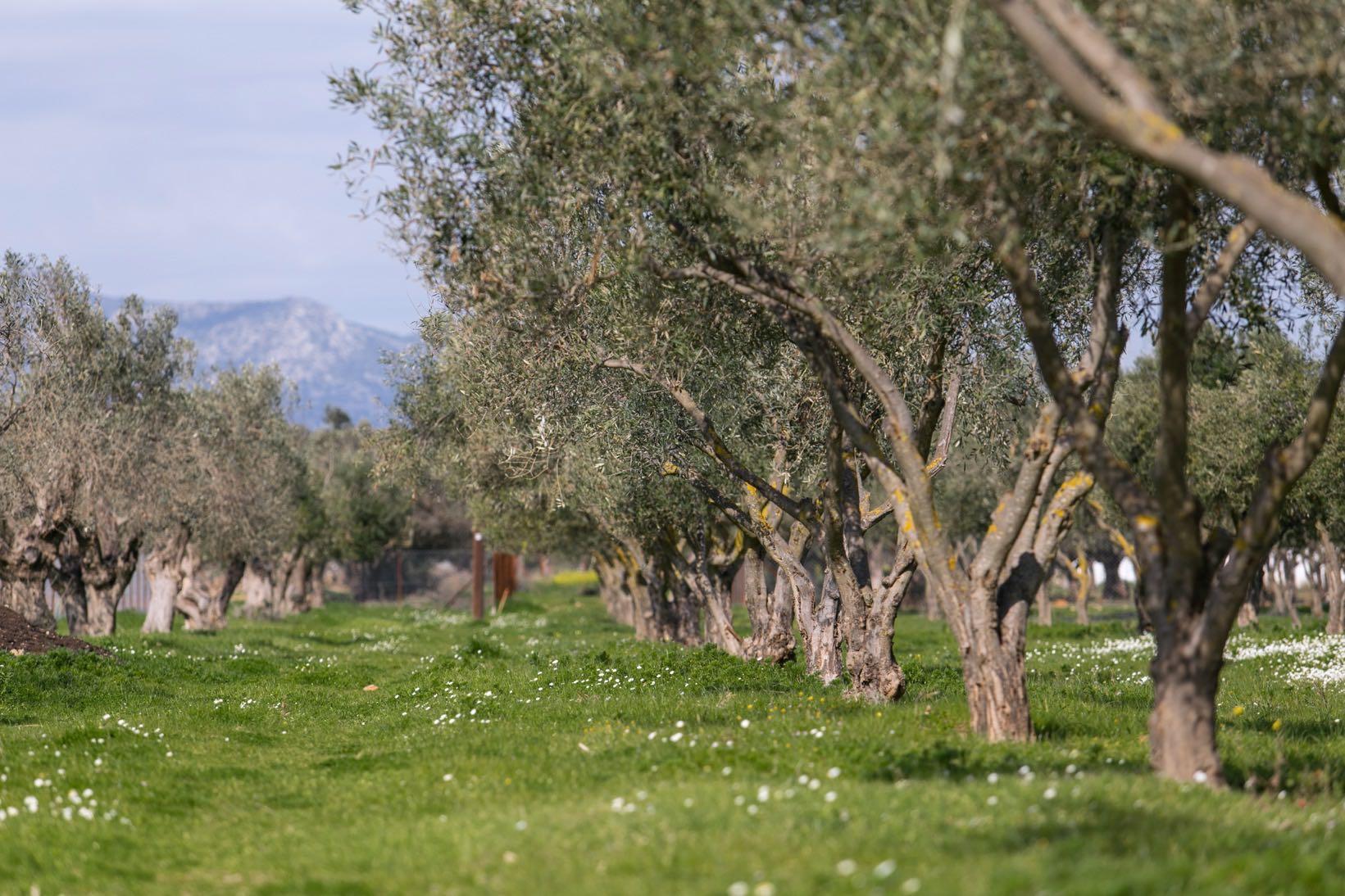 Margi Farm Nikos Karanikolas 8018