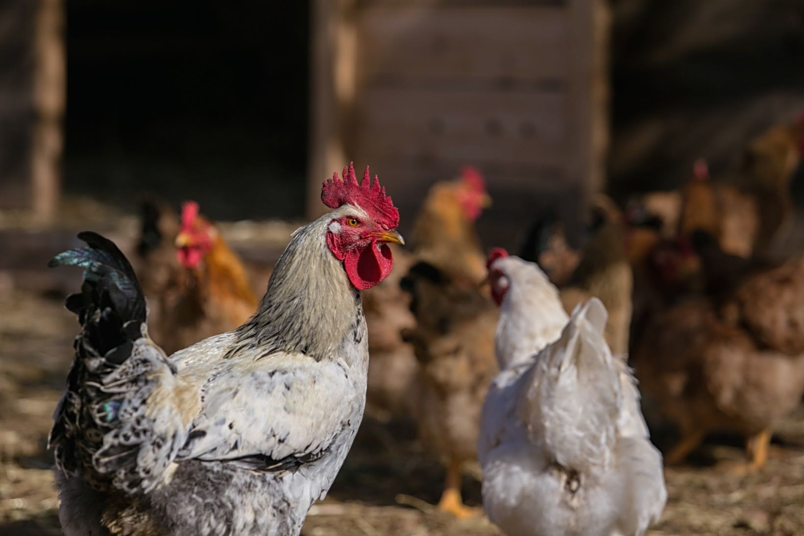 Margi Farm Nikos Karanikolas 8037